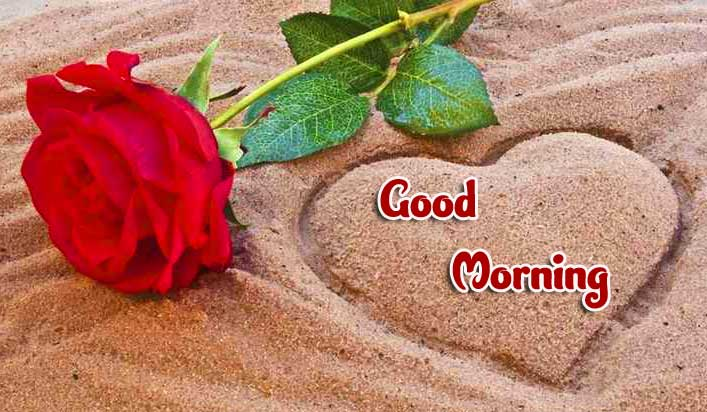 Red Rose Good Morning Wallpaper Pics Free Download