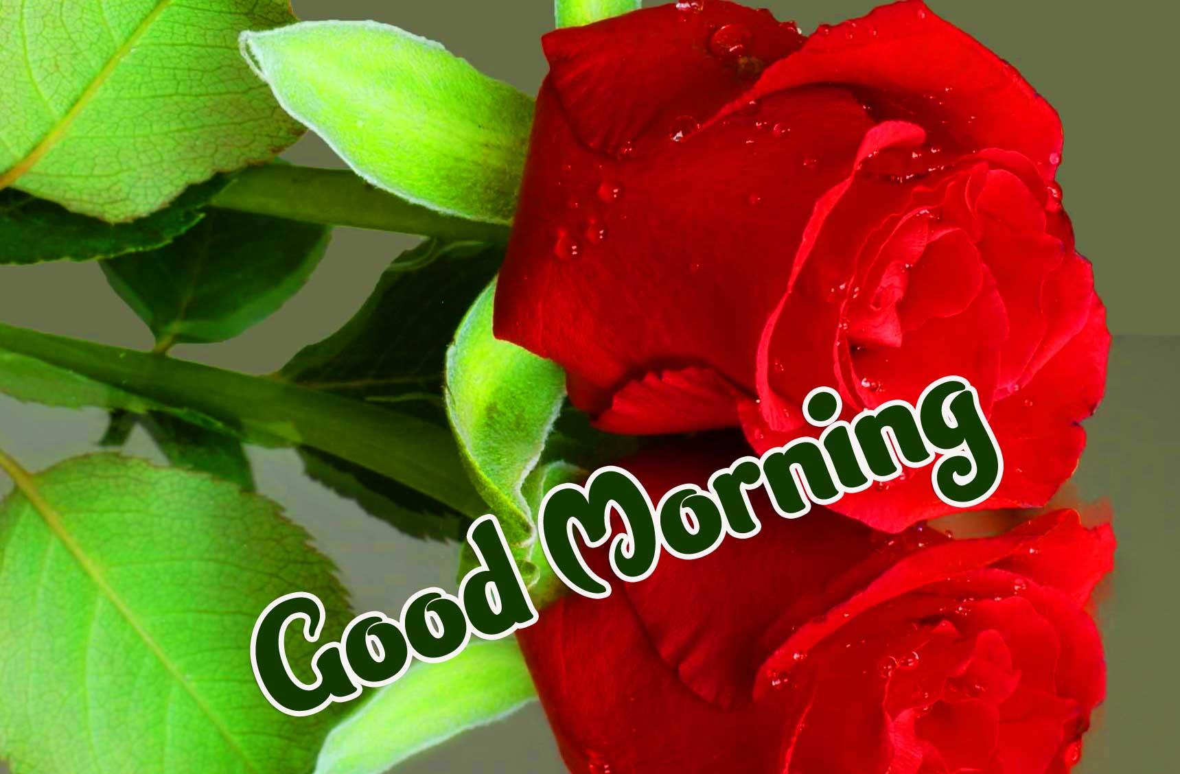 Red Rose Good Morning Wallpaper Pics Download