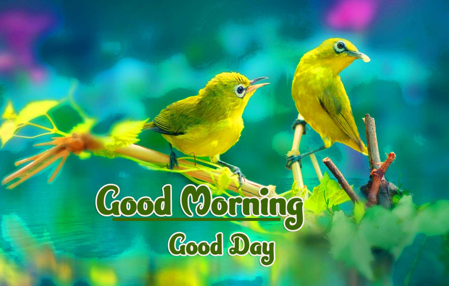 Full HD Free Good Morning Wallpaper Pic Download