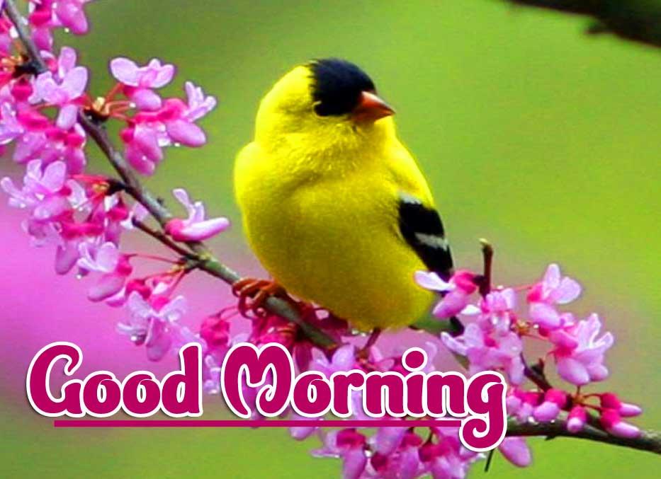 Good Morning Wallpaper Pics for Facebook