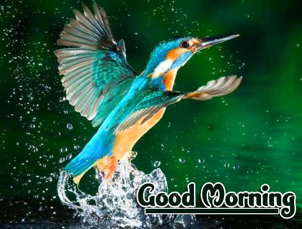 Good Morning Wallpaper Pics Photo Download Free