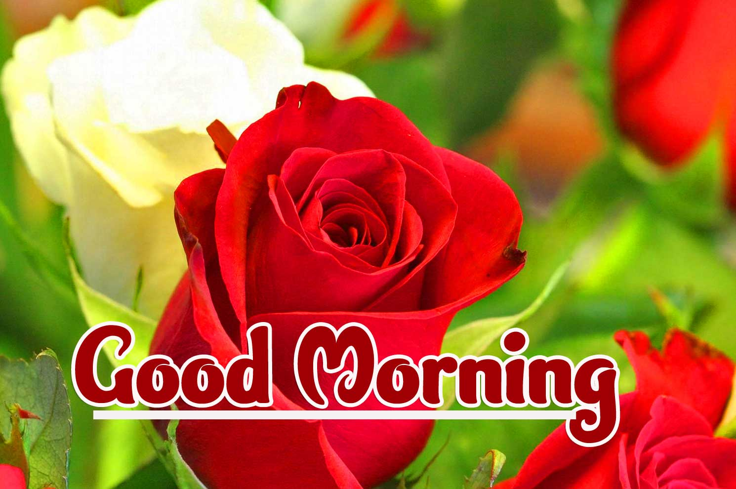 Good Morning Wallpaper Pics Full HD 1080 P