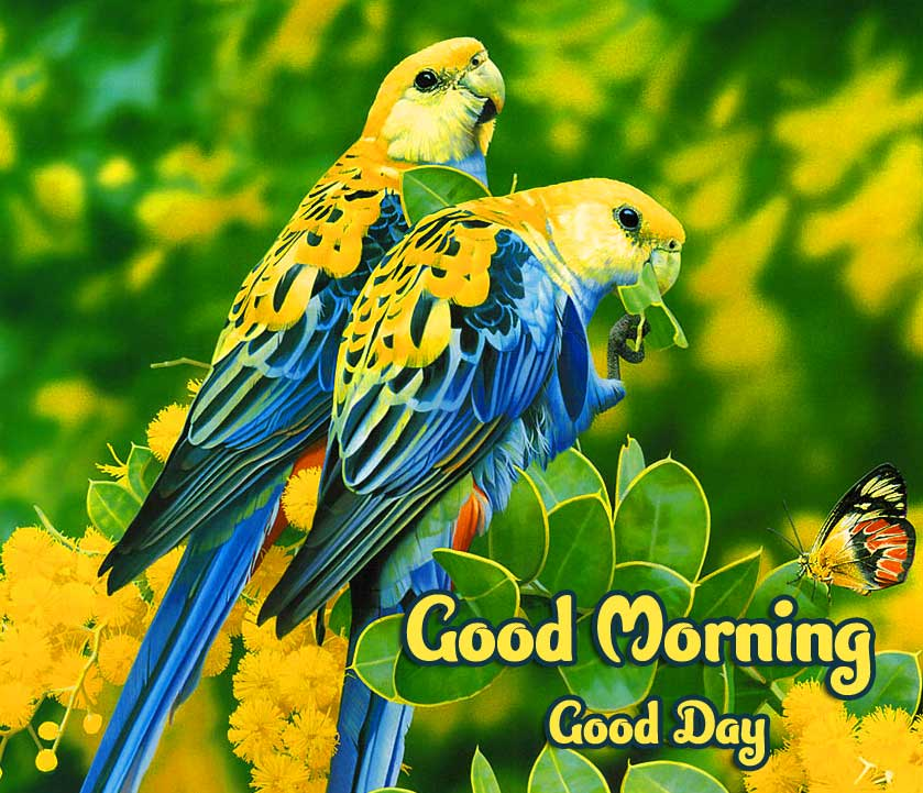 Good Morning Wallpaper Pics Pictures Download Free