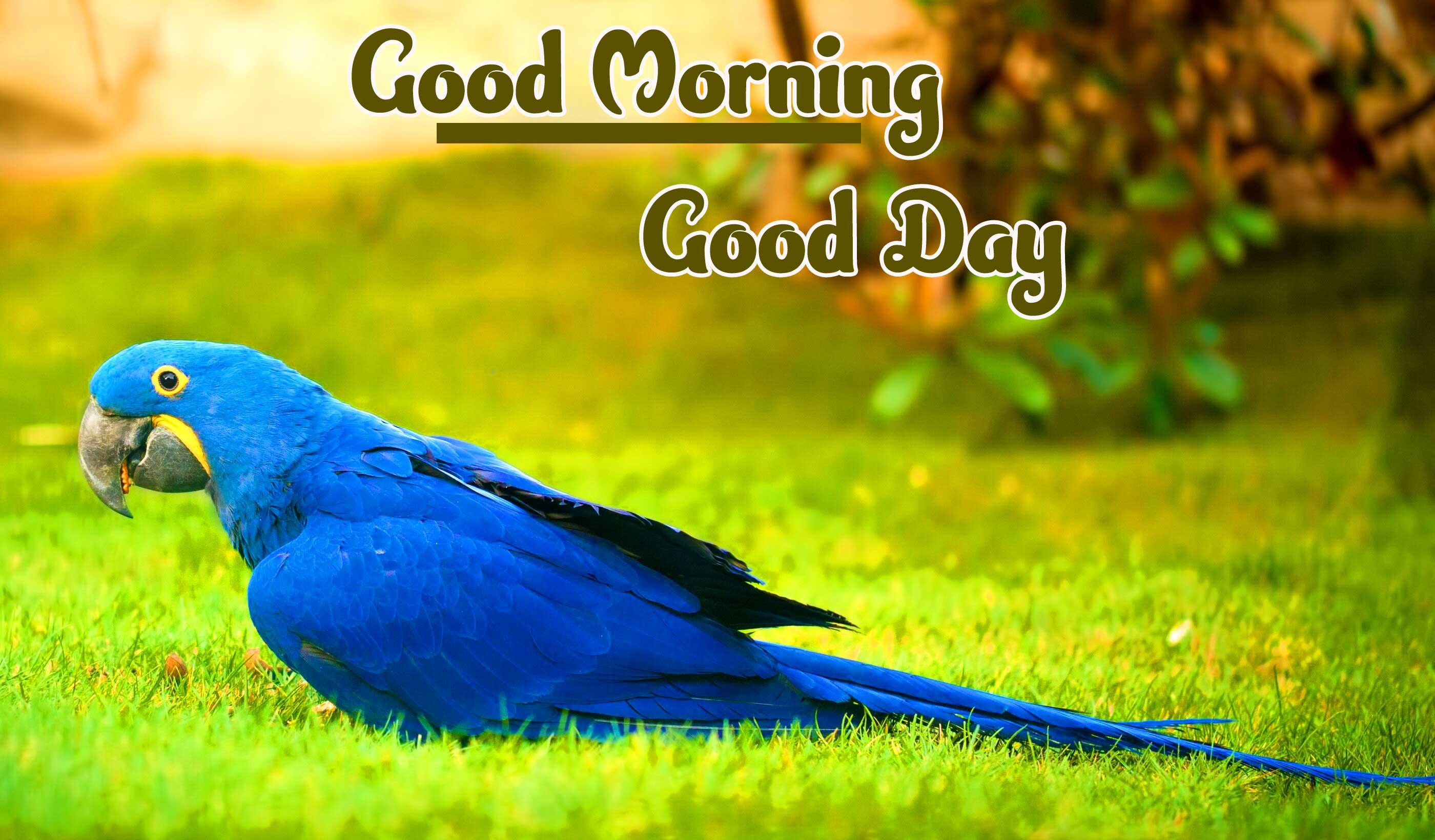 Good Morning Wallpaper Pics HD Full