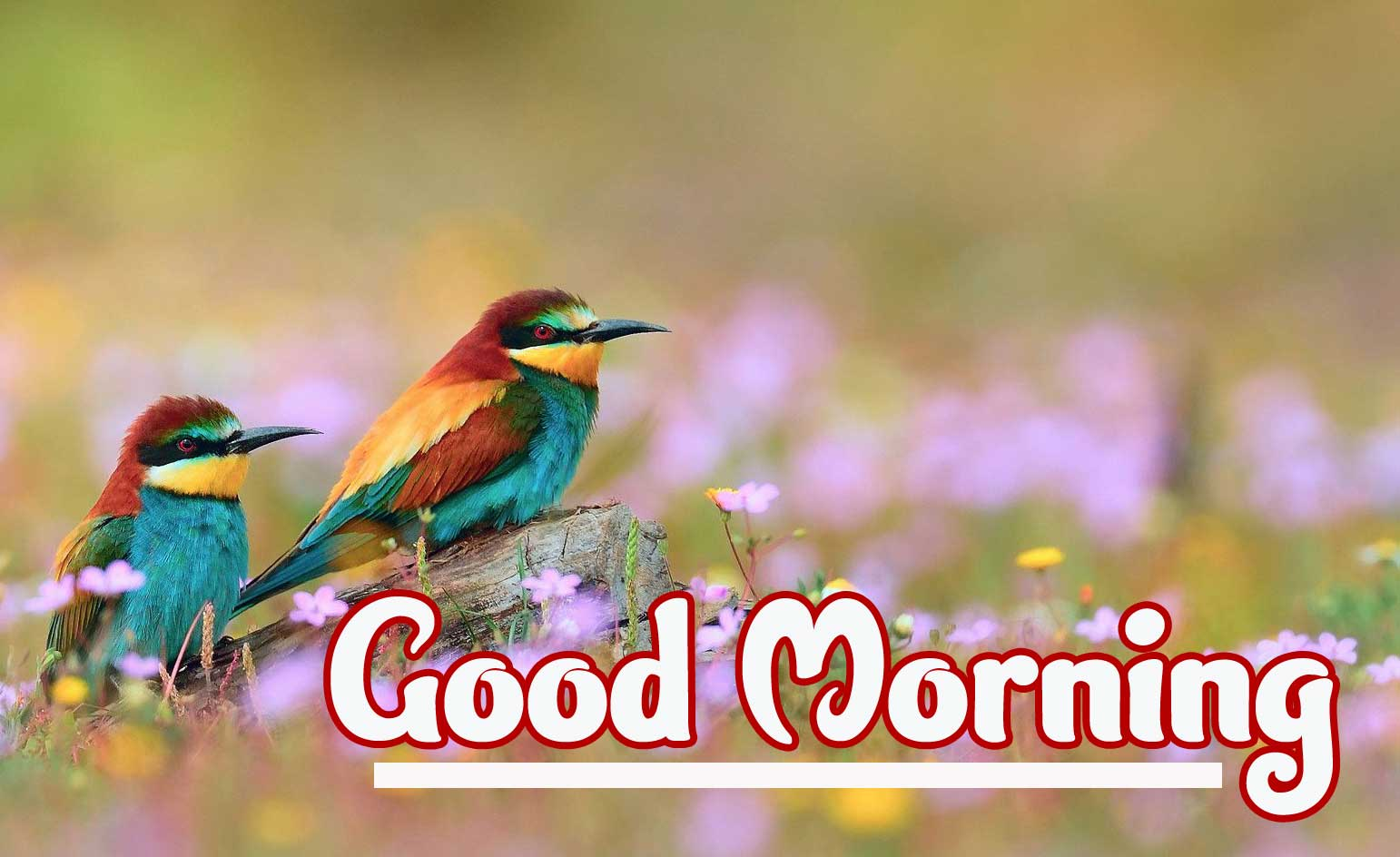Good Morning Wallpaper pics Download Latest Free