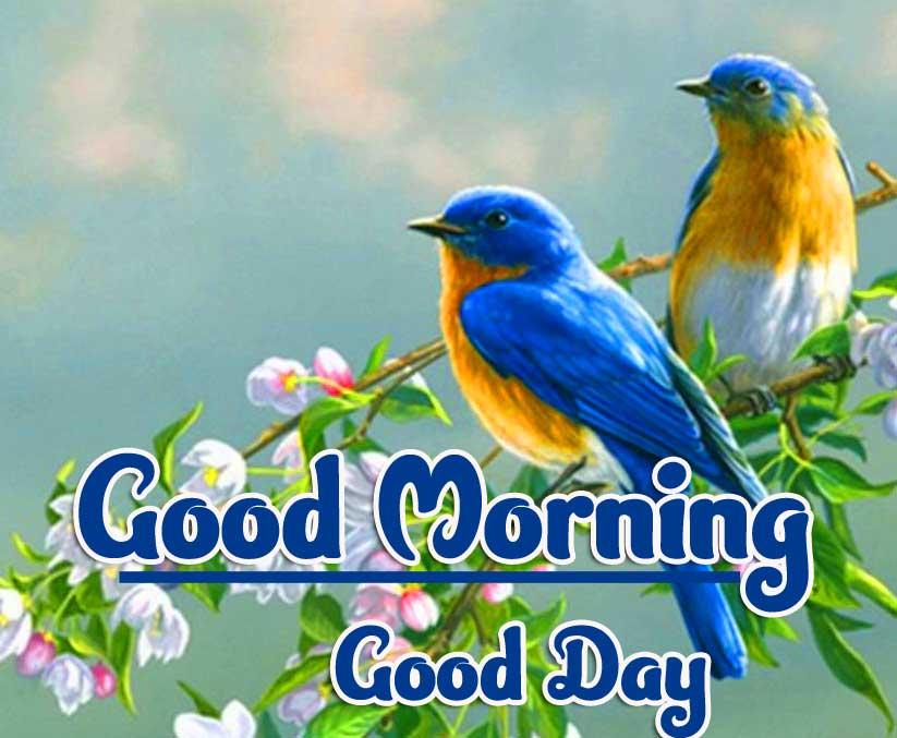 New All Good Morning Wallpaper Pics Wallpaper Free Download