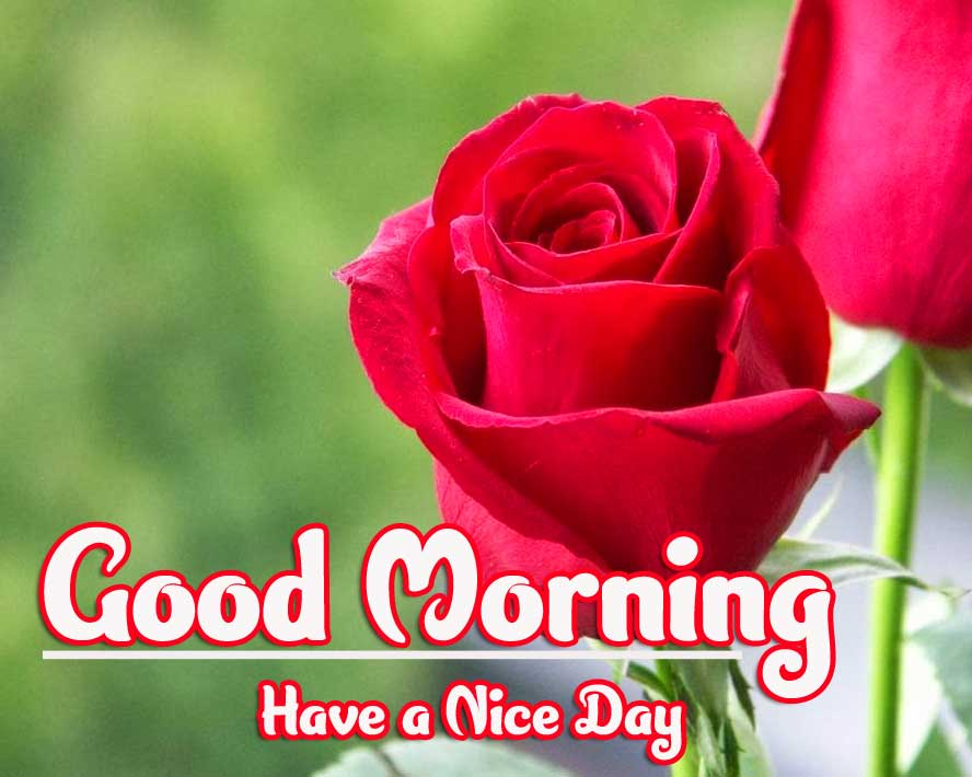 Good Morning Wallpaper Pics Photo With Red Rose