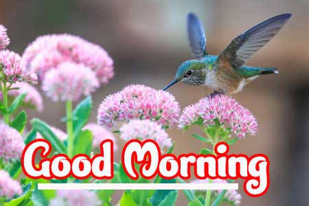 Good Morning Wallpaper Pictures Download Latest Free
