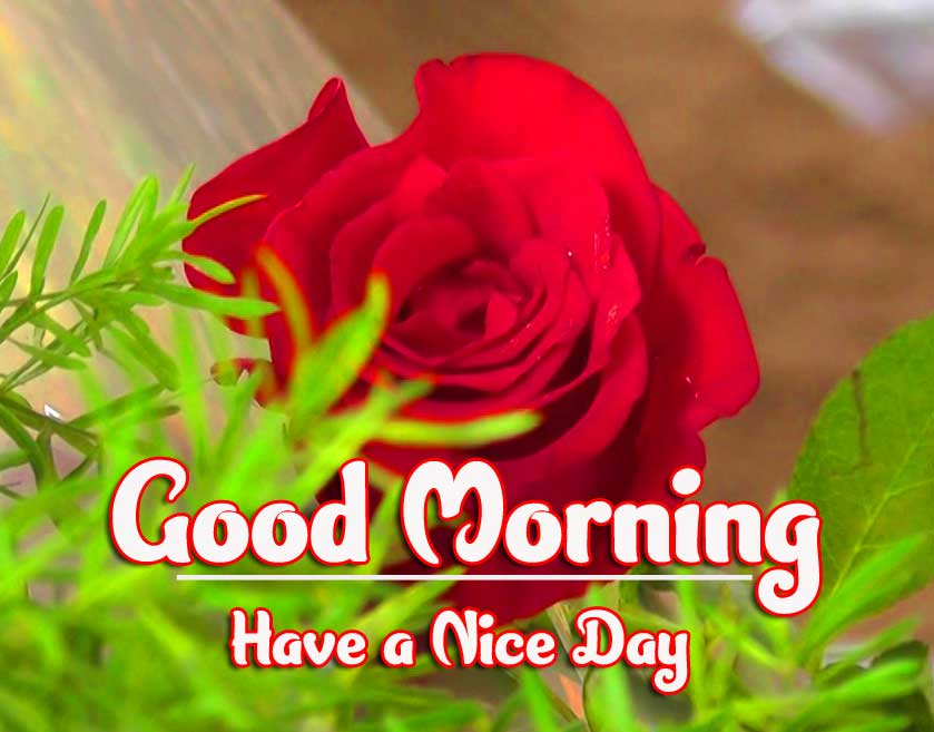 Good Morning Wallpaper Pics photo Free With Red Rose