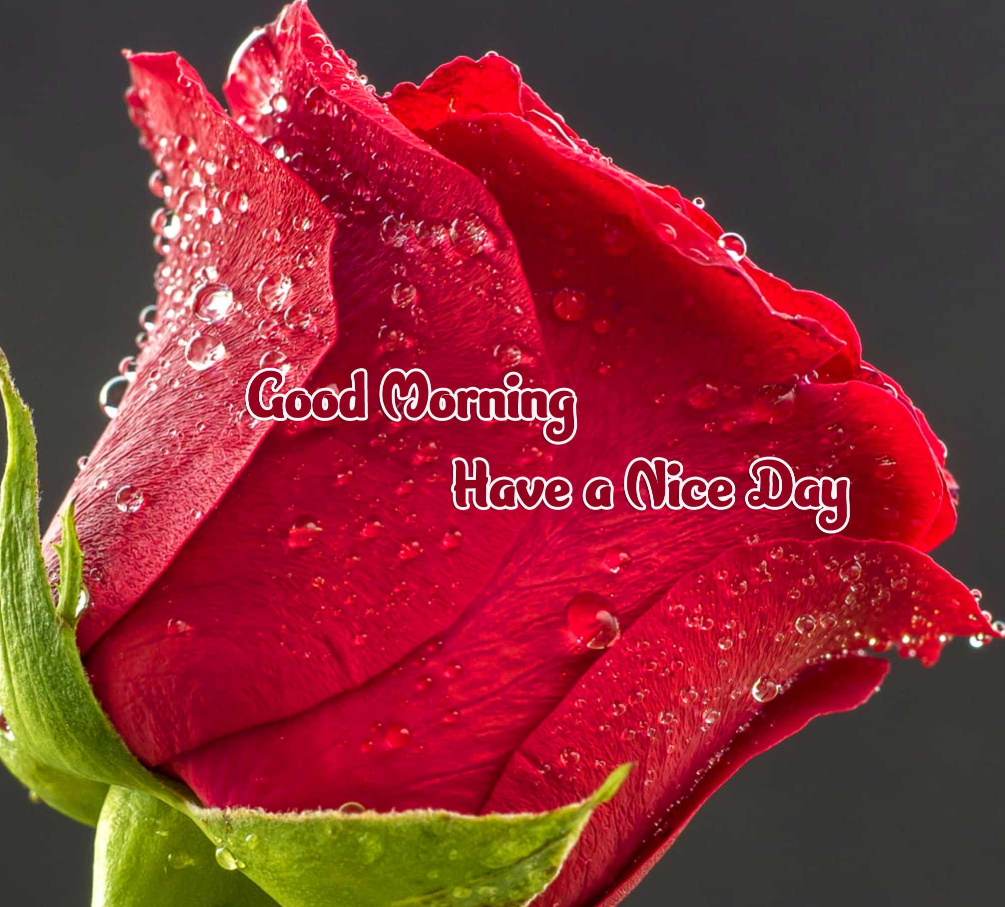 Flower Free Good Morning Wallpaper Pics Download