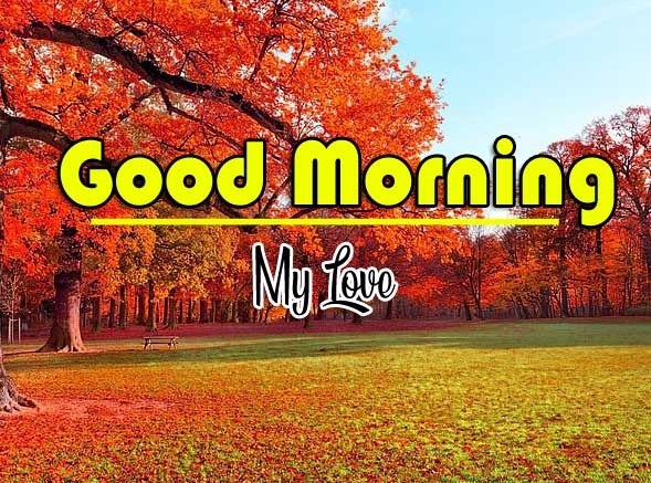 Good Morning Wishes Wallpaper Photo Download