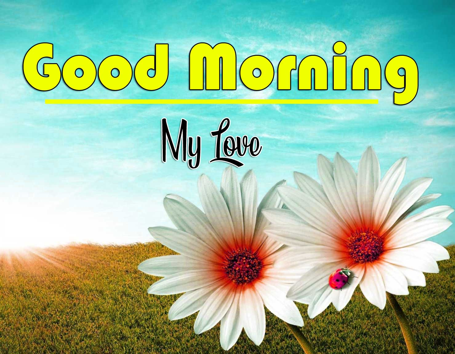 Good Morning Wishes Wallpaper Images With Flower