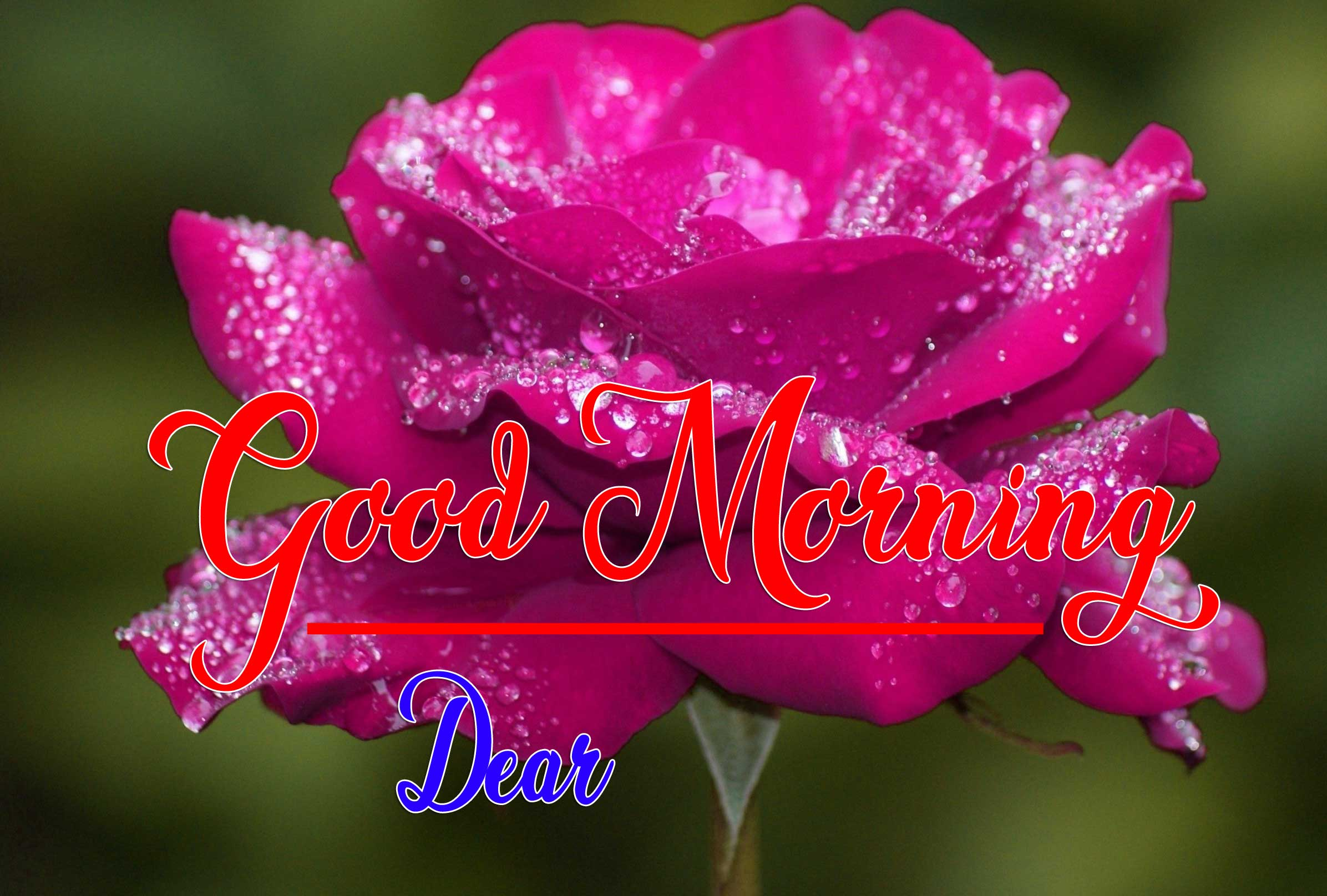 Good Morning Wishes Wallpaper Pics pictures Download