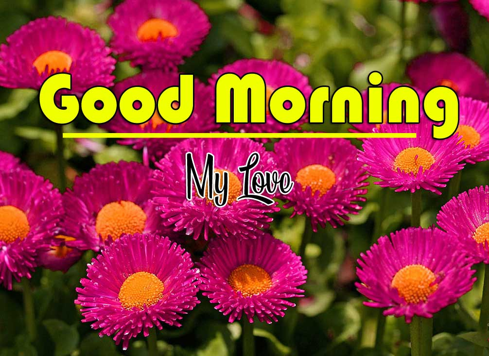 Best Free Good Morning Wishes Wallpaper Pics Download