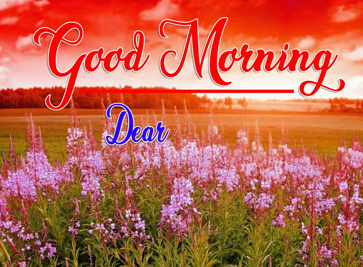 Best Free Good Morning Wishes Wallpaper Pictures Free Download