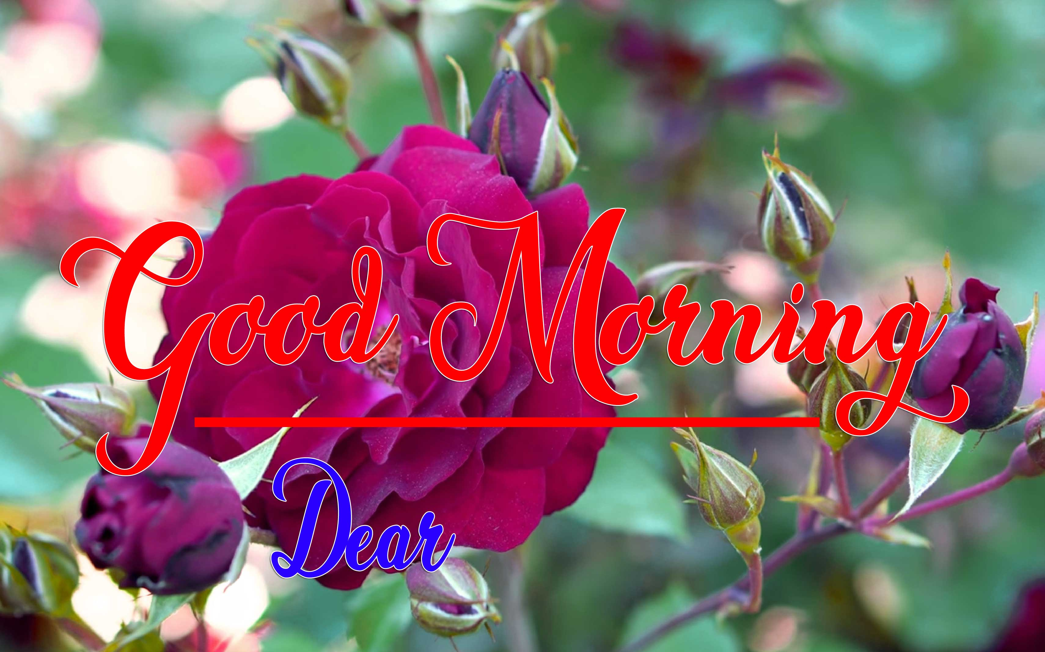 Rose Good Morning Wishes Images Pics Download
