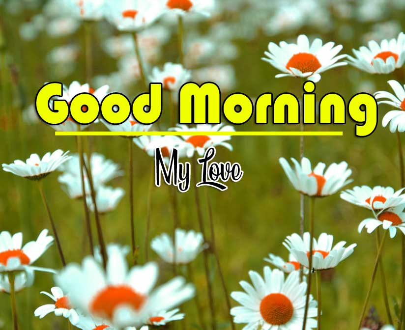 Good Morning Wishes photo Wallpaper Download
