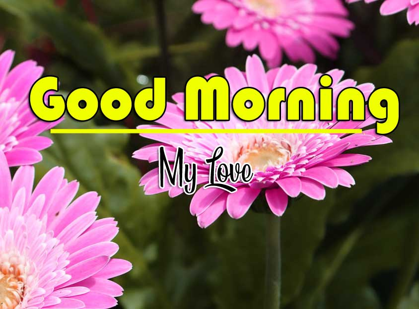 Good Morning Wishes Pics photo Download