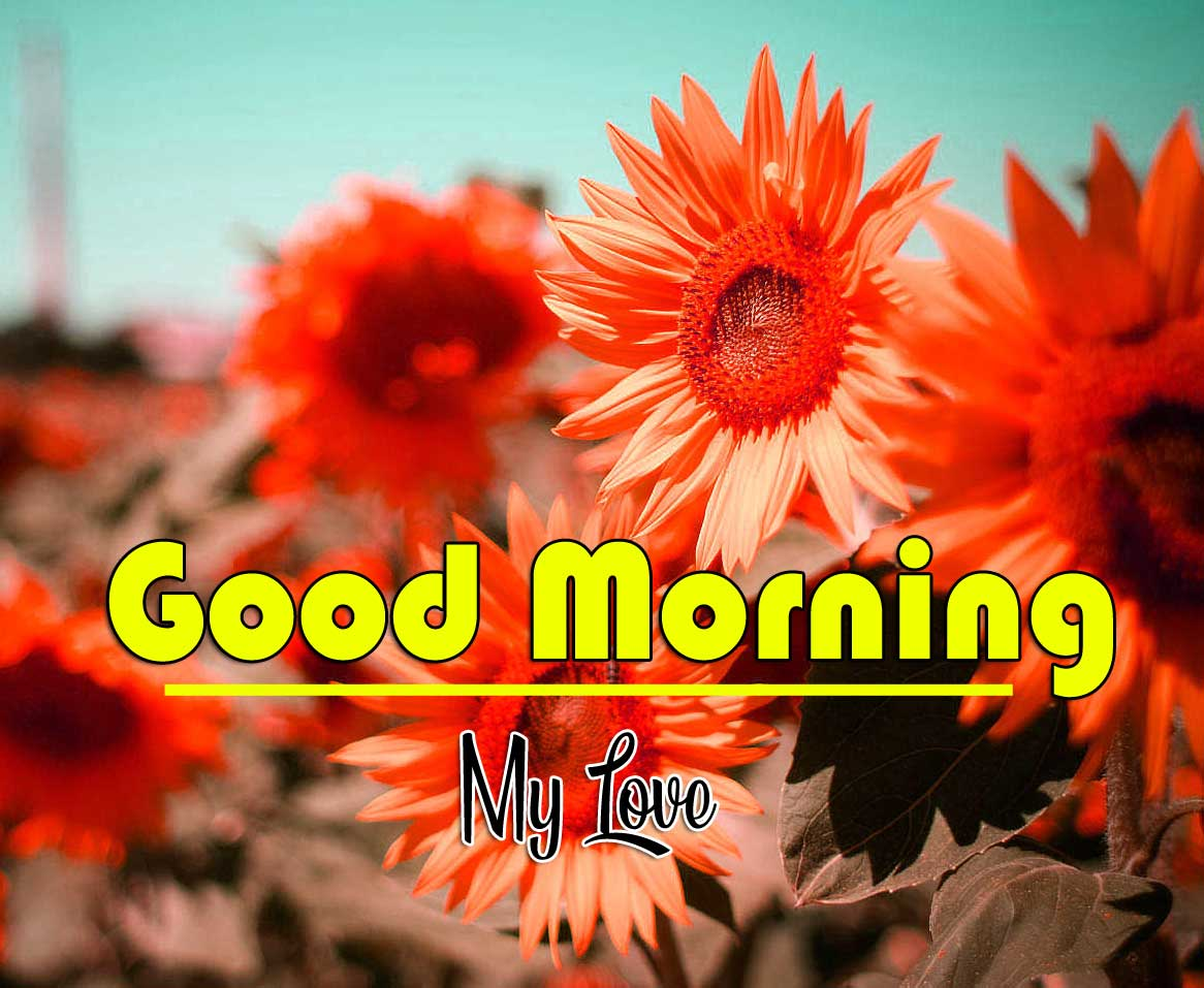 Good Morning Wishes Pics Wallpaper HD Download