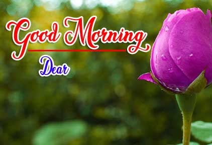 Good Morning Wishes Pics Wallpaper Free Download