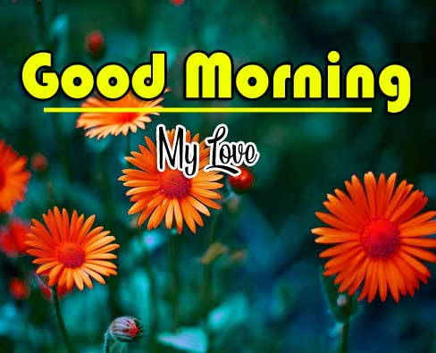 Good Morning Wishes Pics Wallpaper Download