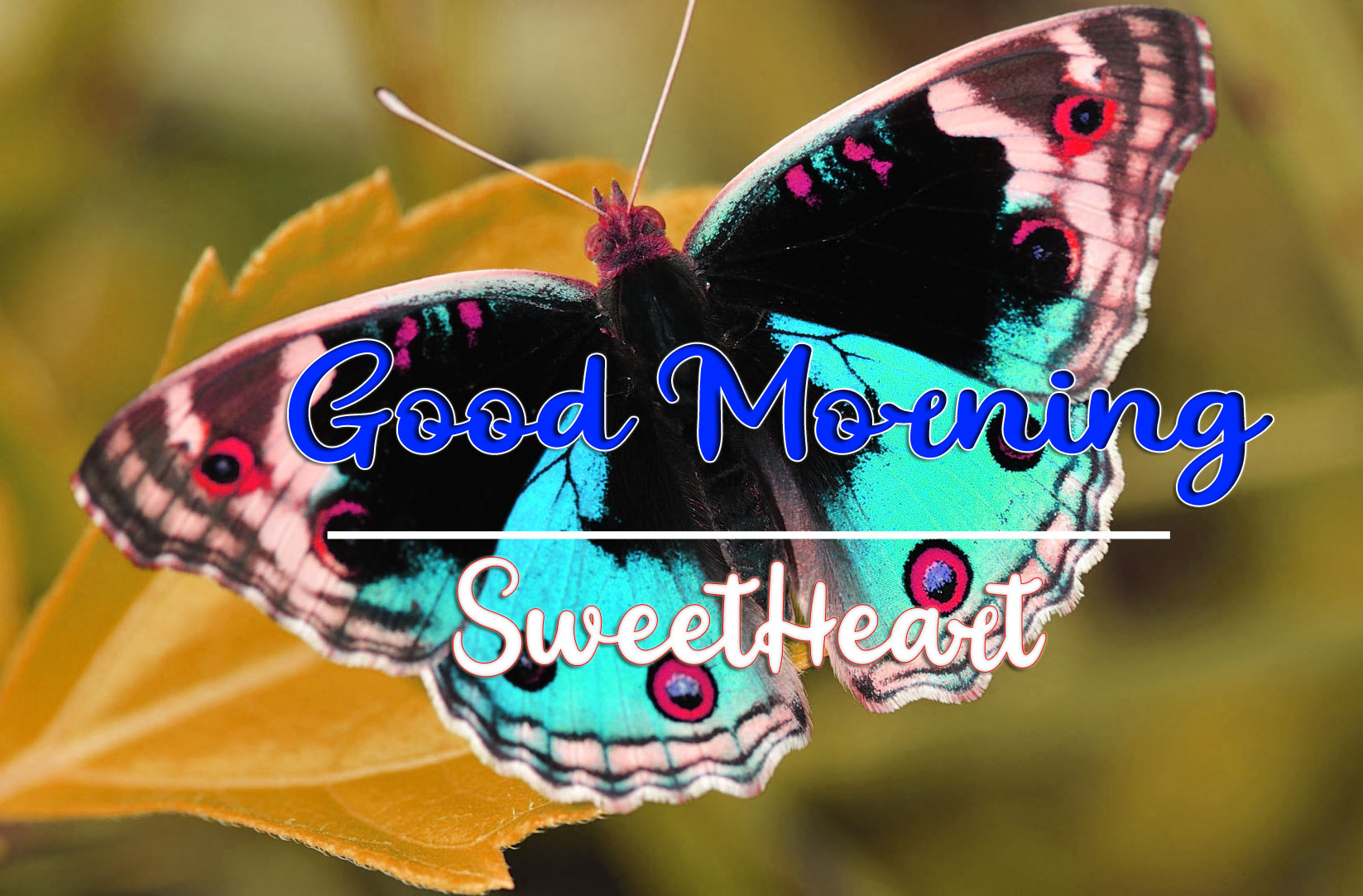Good Morning Wishes Images HD 1080p 13