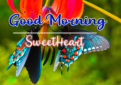Good Morning Wishes Images HD 1080p 26