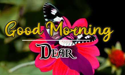 Good Morning Wishes Images HD 1080p 27