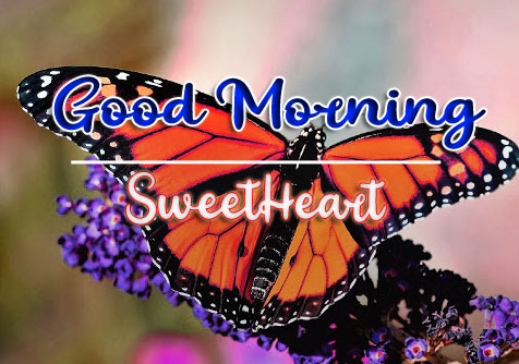 Good Morning Wishes Images HD 1080p 28