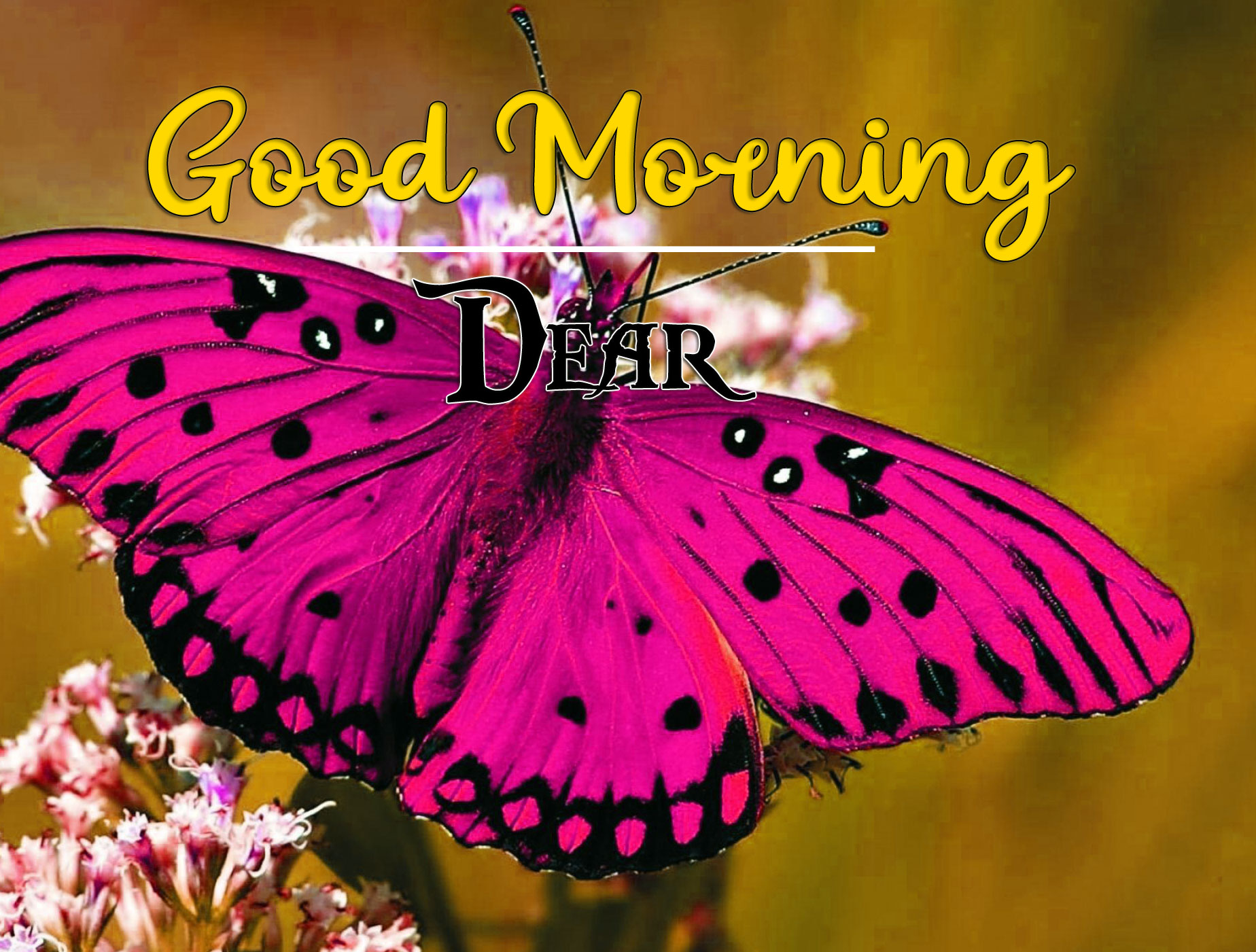 Good Morning Wishes Images HD 1080p 33