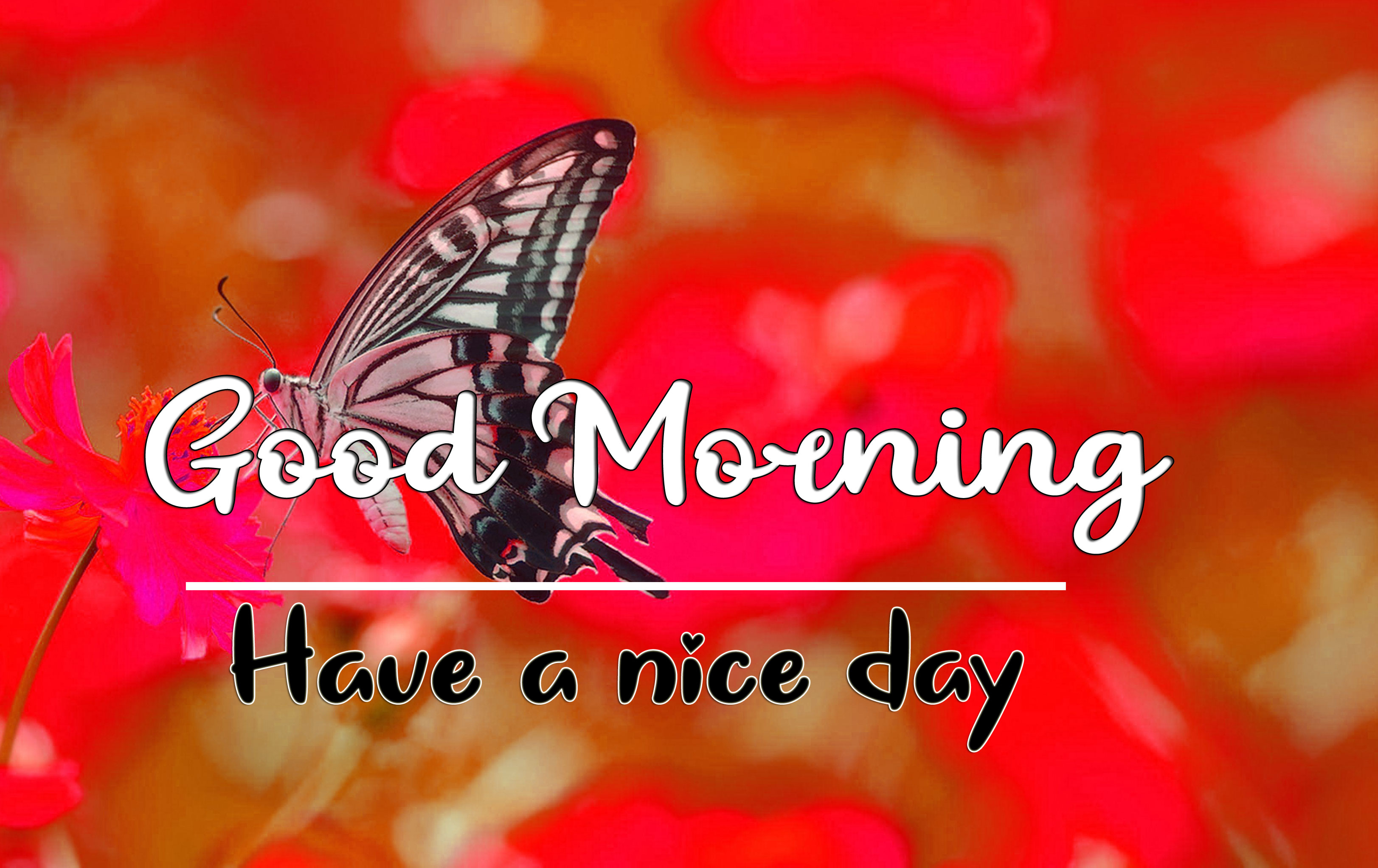 Good Morning Wishes Images HD 1080p 34