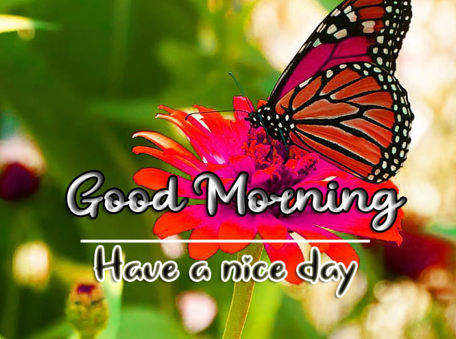 Good Morning Wishes Images HD 1080p 7