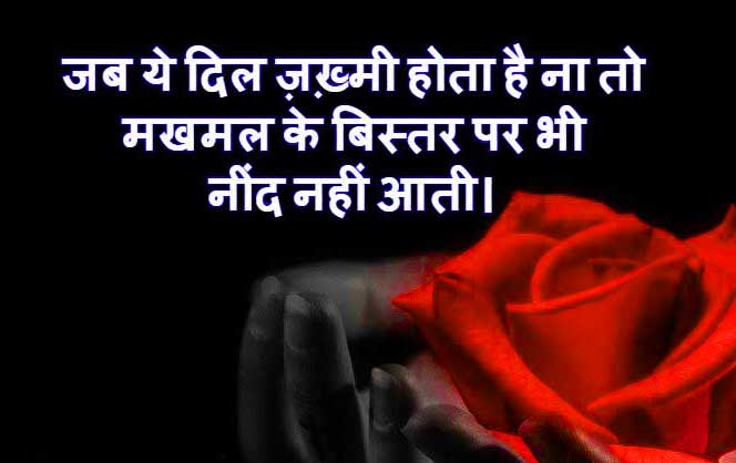 Hindi Love Status Images pics Wallpaper With red Rose