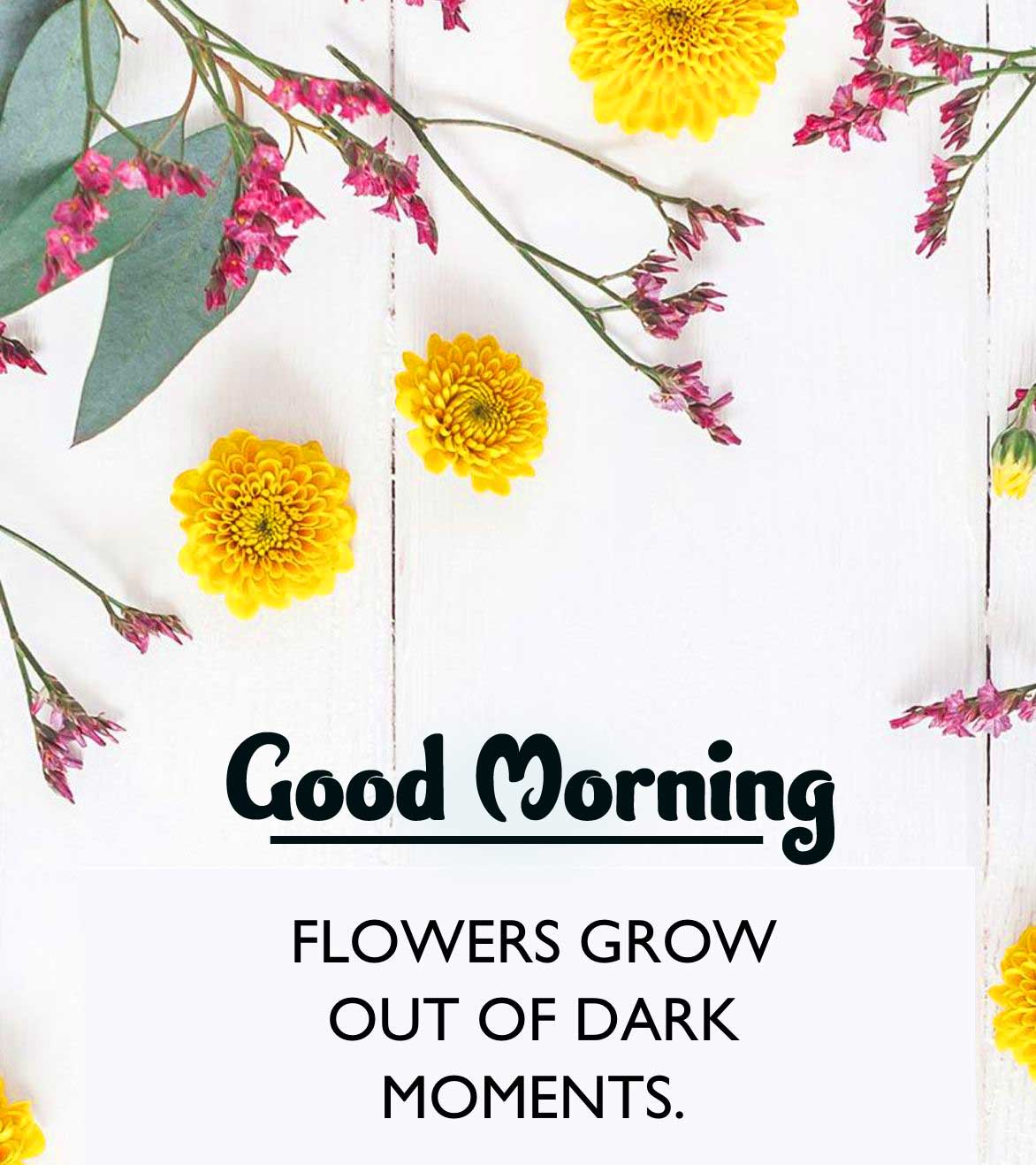 Quotes Good Morning Images Wallpaper Free Download