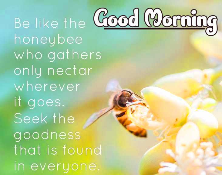 Quotes Good Morning Images Pics Wallpaper Download