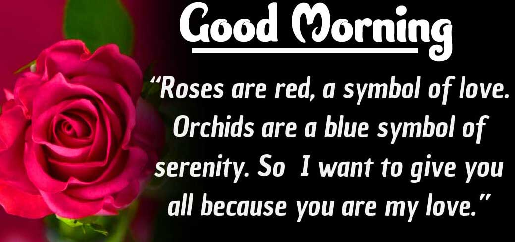 Quotes Good Morning Images Pics Free Download With Red Rose