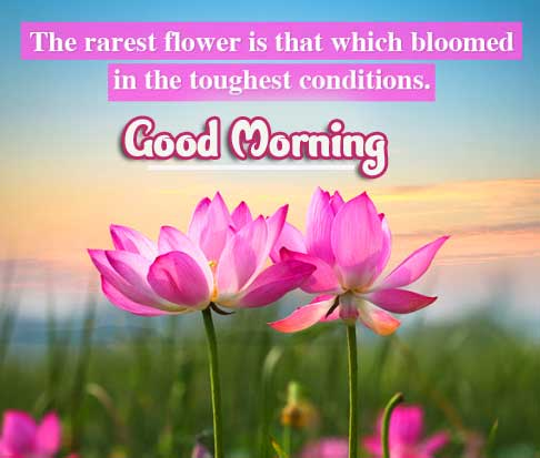 Quotes Good Morning Images Photo Free Download