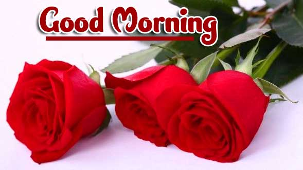 Rose free Best Latest Good Morning Images Pics Download