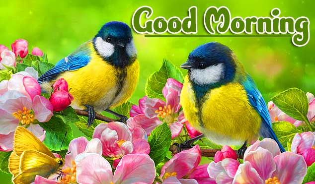 Best Latest Good Morning Images Wallpaper free Download
