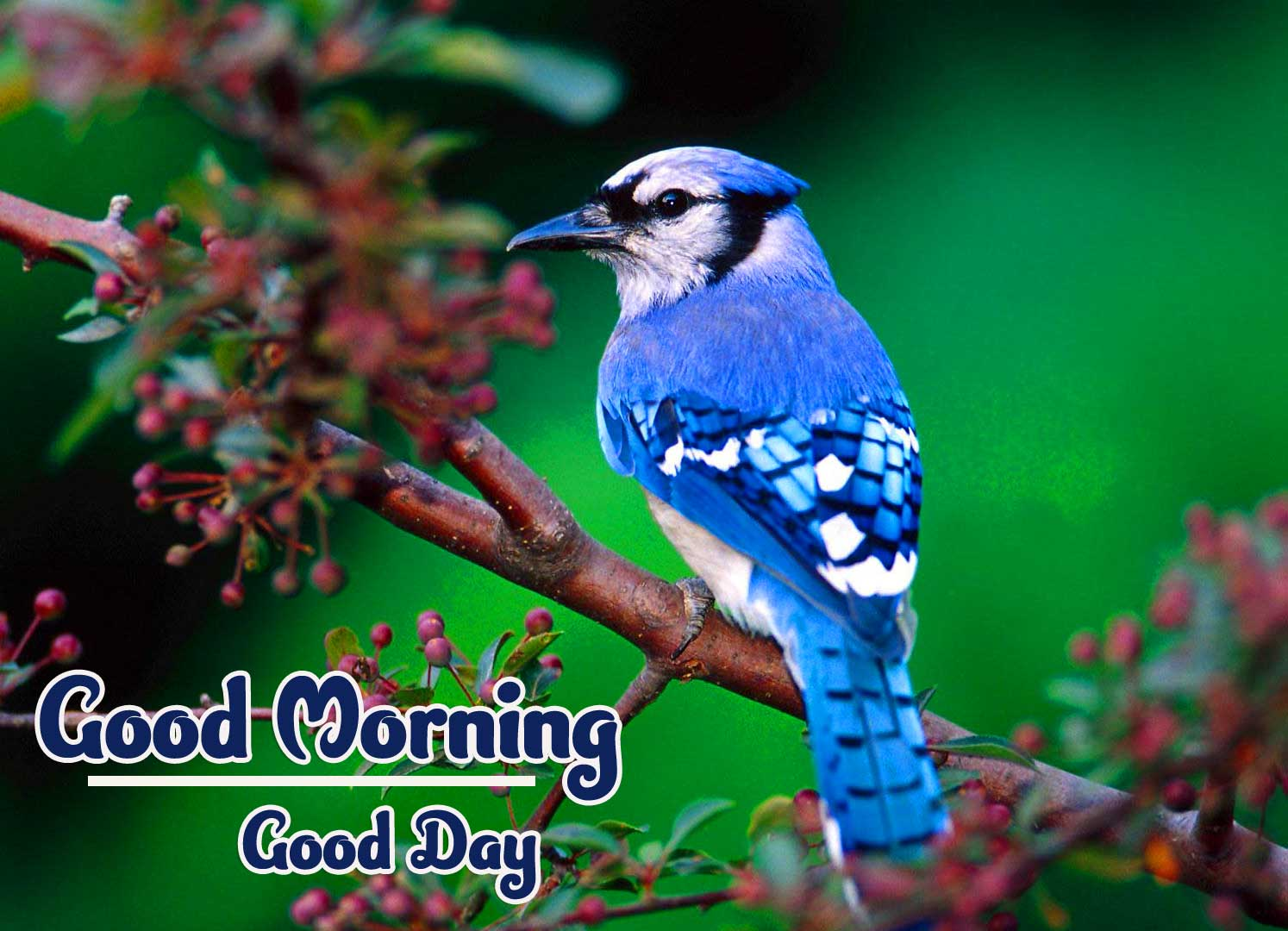 Best Latest Good Morning Images Wallpaper Download