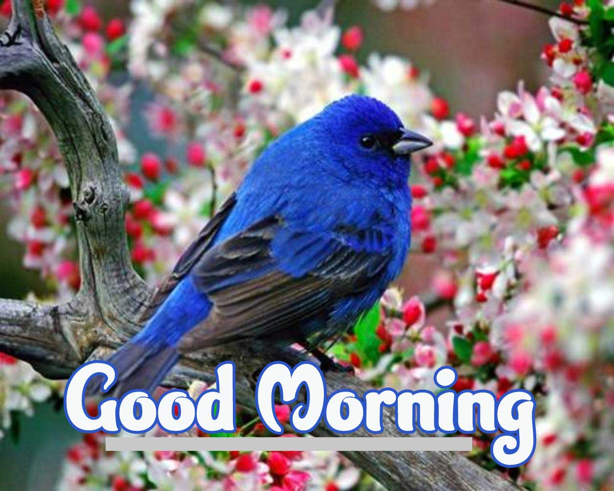 Latest Good Morning Images Full HD Free Download 95