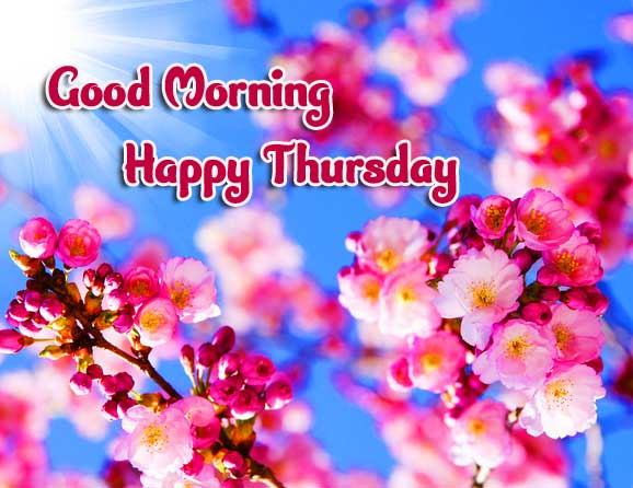 Thursday Good Morning Images Photo Wallpaper free Download