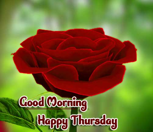 Flower Thursday Good Morning Images Pics Download Free