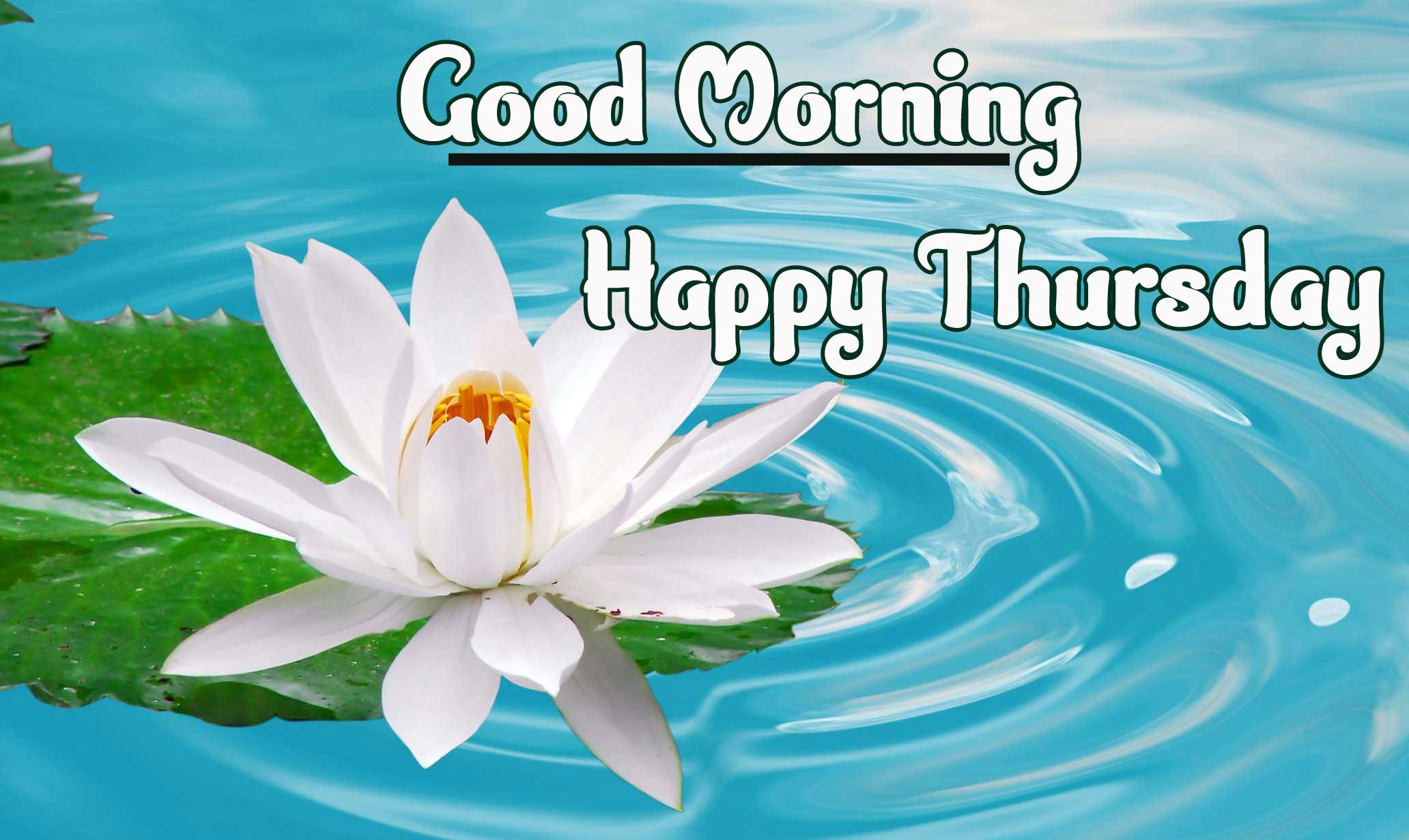 Thursday Good Morning Images Wallpaper pics Download
