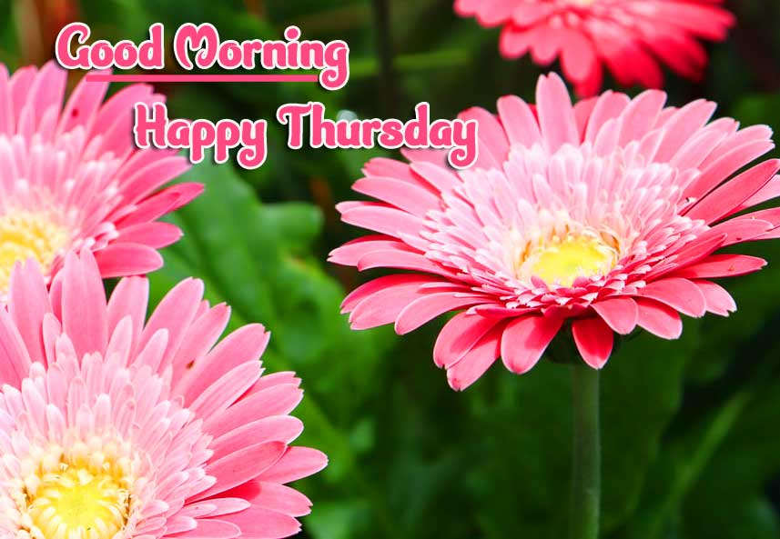 Thursday Good Morning Images Wallpaper Free Download