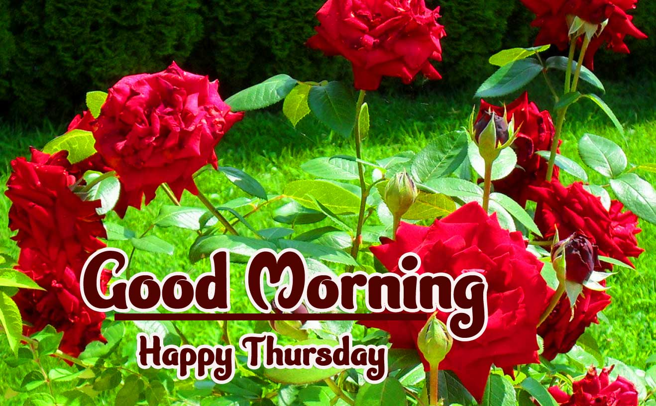 Beautiful Thursday Good Morning Images Wallpaper Free Download