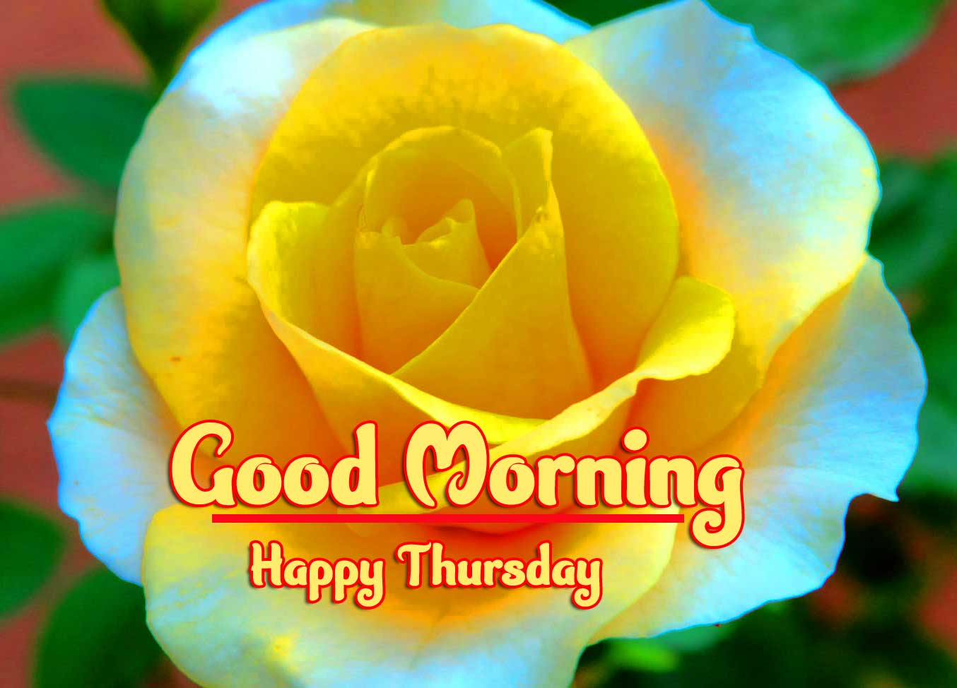 Beautiful Thursday Good Morning Images Pics photo Download