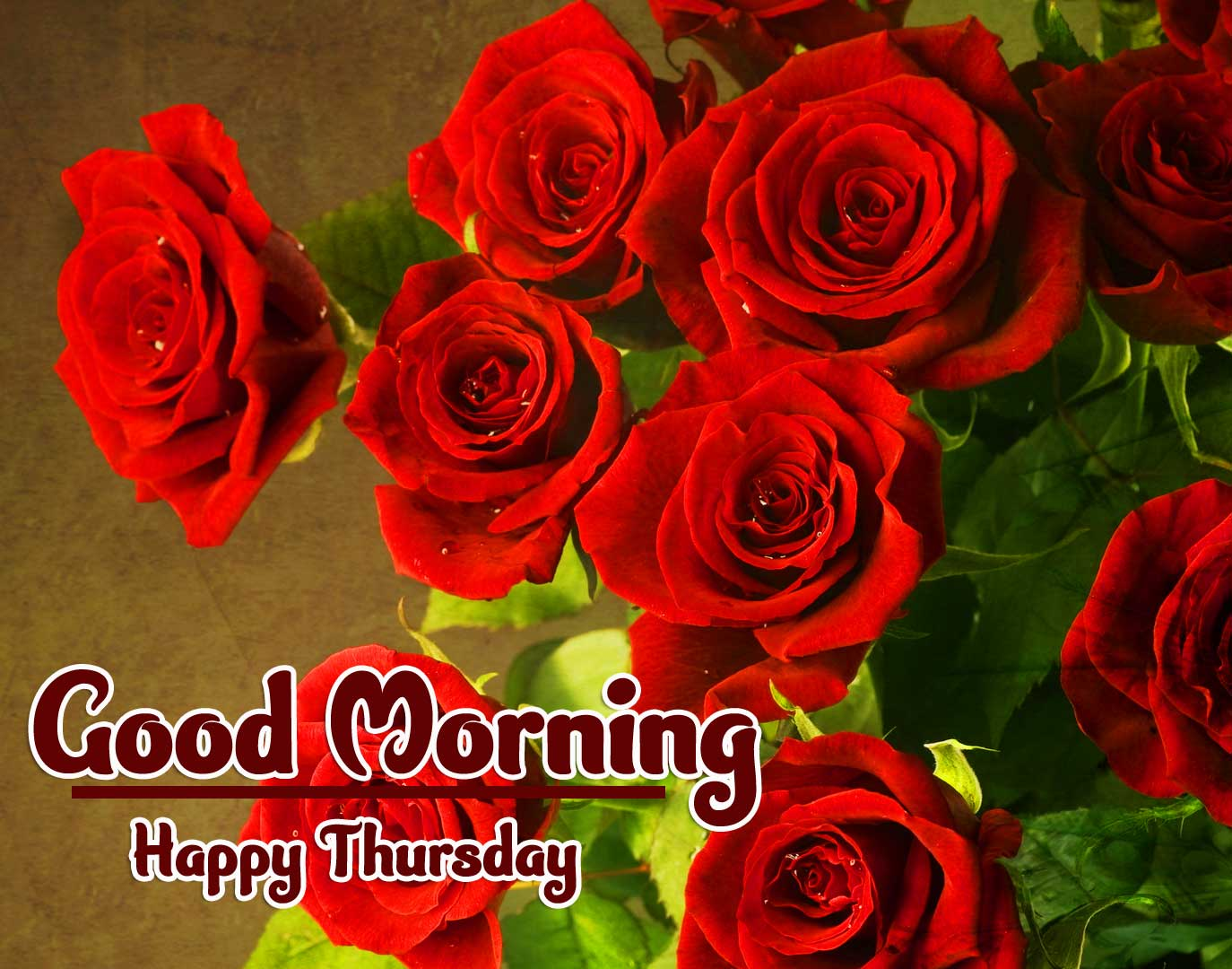 Beautiful Thursday Good Morning Images Pics Download With Red Rose
