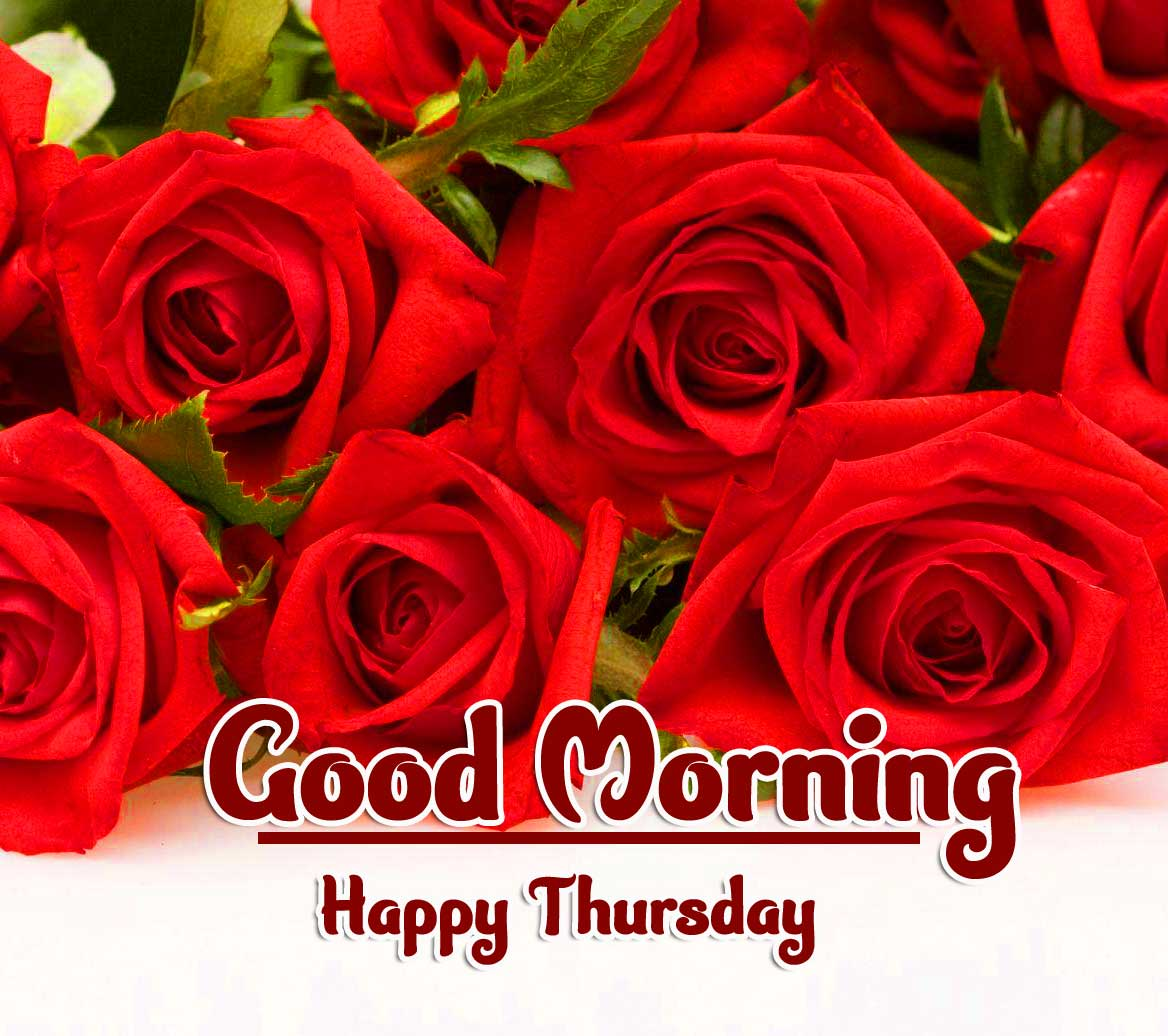 Rose Free Beautiful Thursday Good Morning Images Pics Download