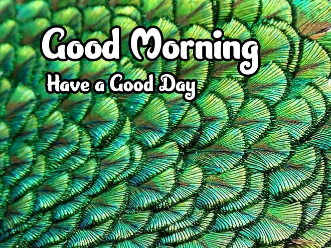 Good Morning Images 4K 1080p Pics photo Download